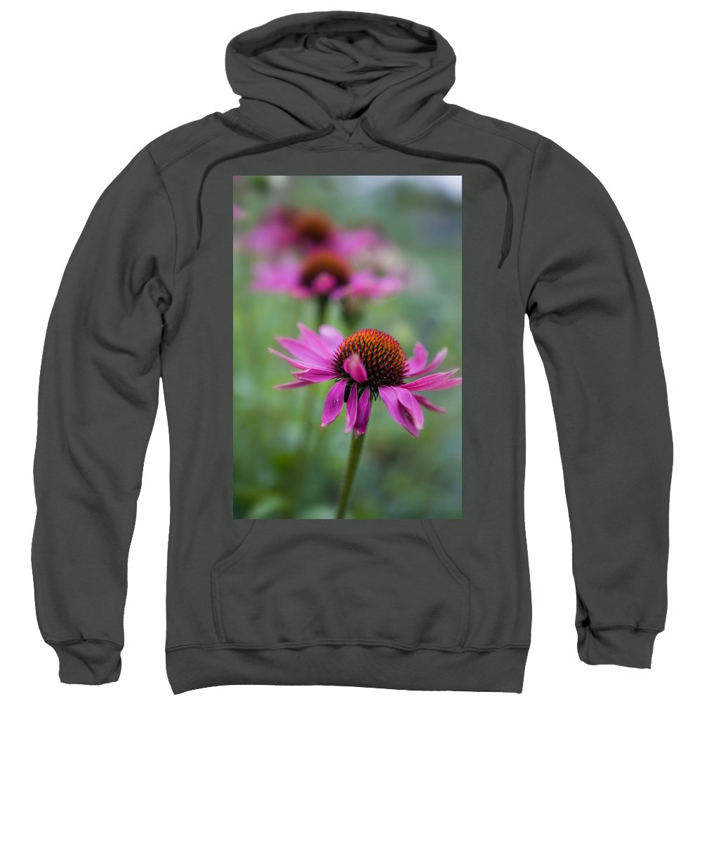 Coneflowers Sweatshirt featuring the photograph Purple Coneflowers In A Row by Ludwig Riml