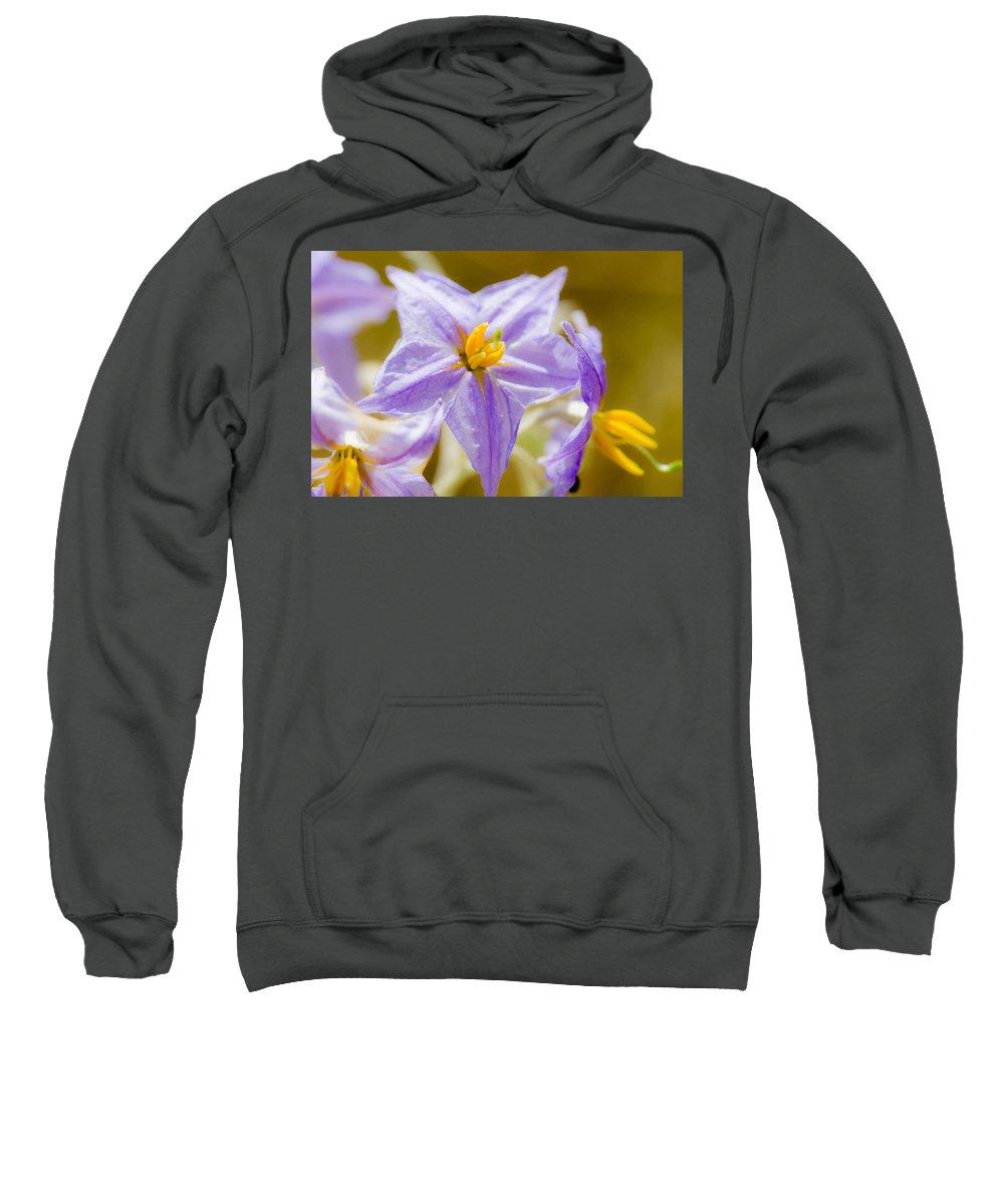 Purple Life Sweatshirt featuring the photograph Purple Life II by Sotiris Filippou