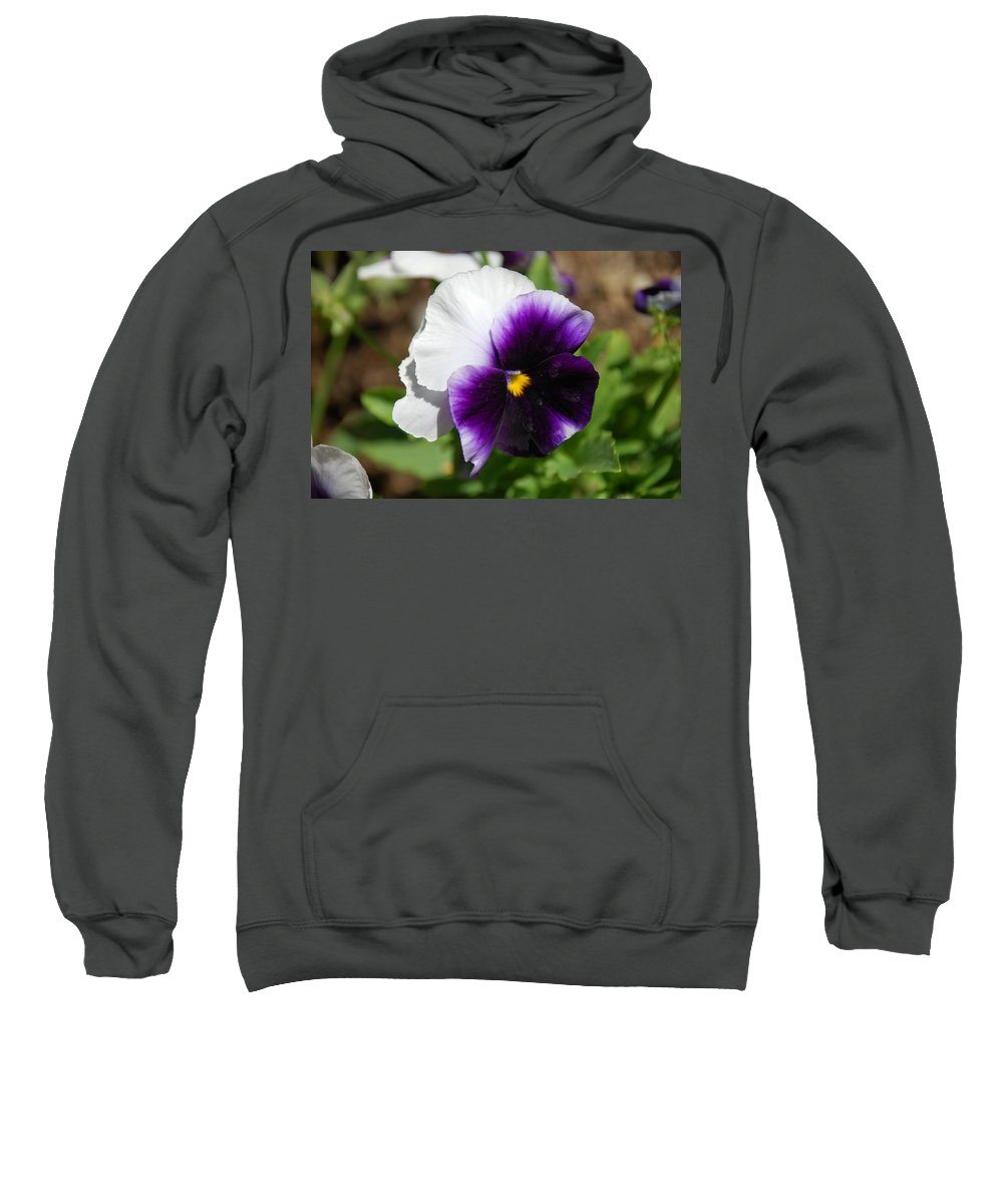 Pansy Sweatshirt featuring the photograph Purple Pansy by Todd and Ashleigh Madsen