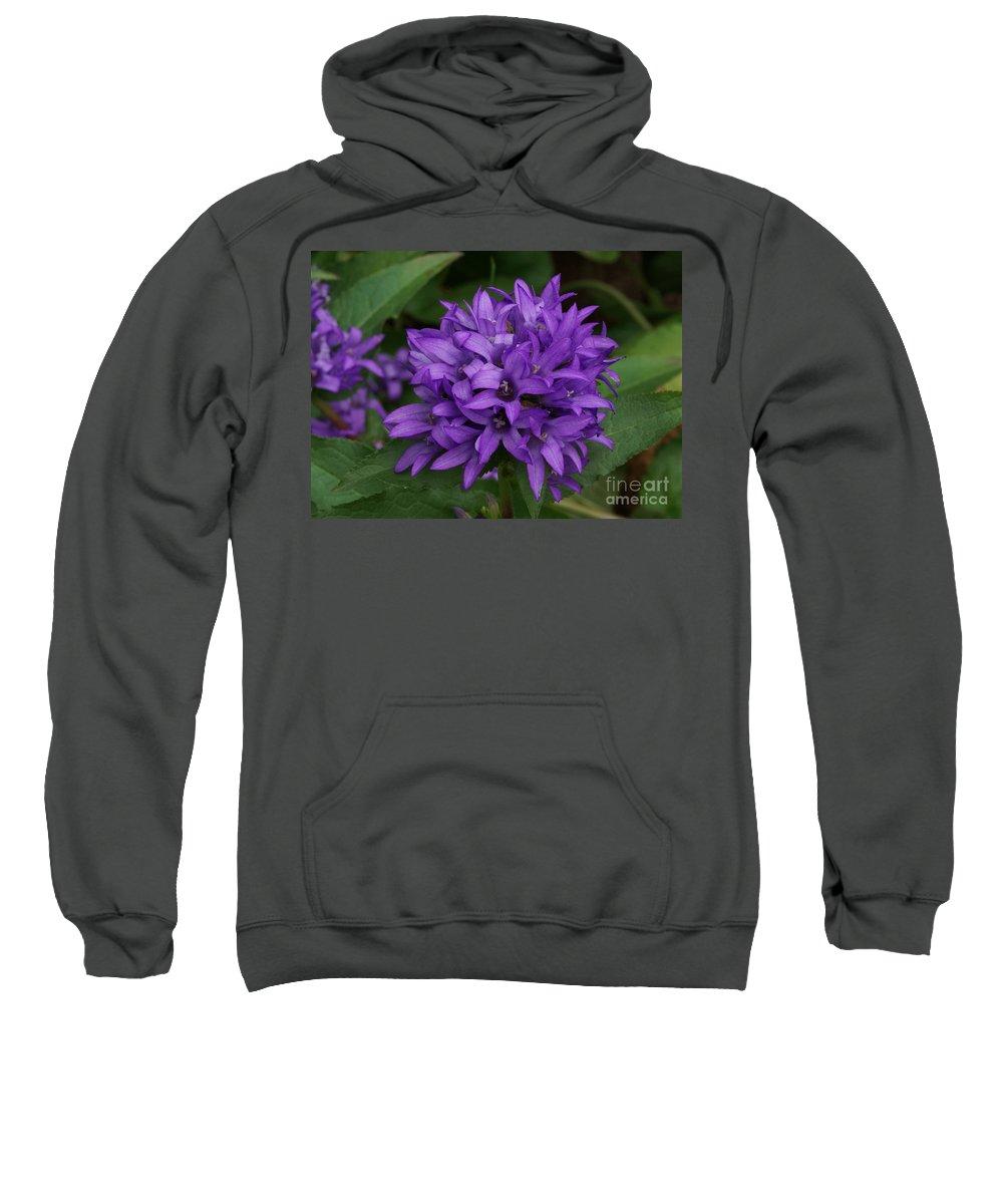 Purple Sweatshirt featuring the photograph Purple Pride by Lori Tordsen