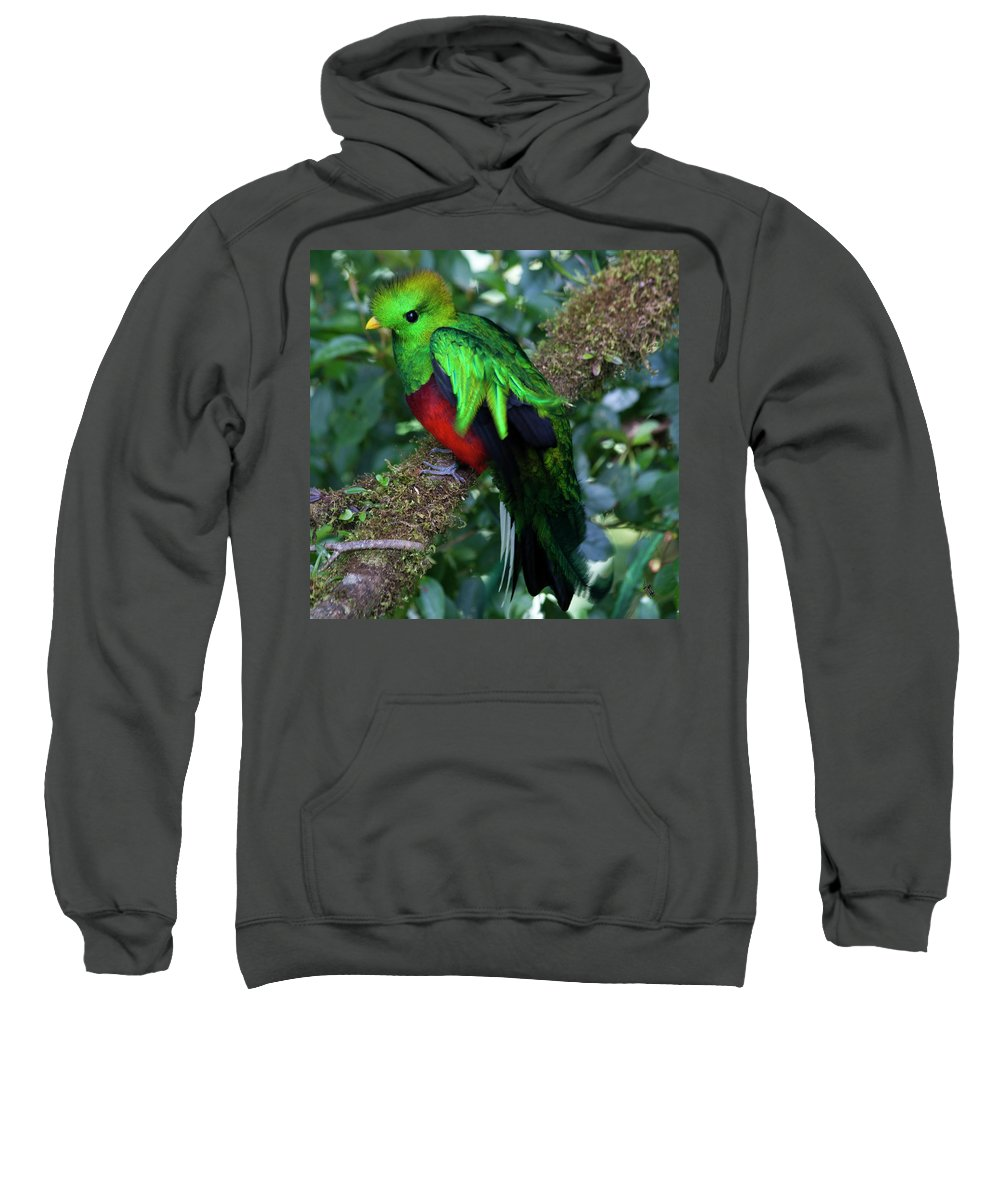 Bird Sweatshirt featuring the photograph Quetzal by Heiko Koehrer-Wagner