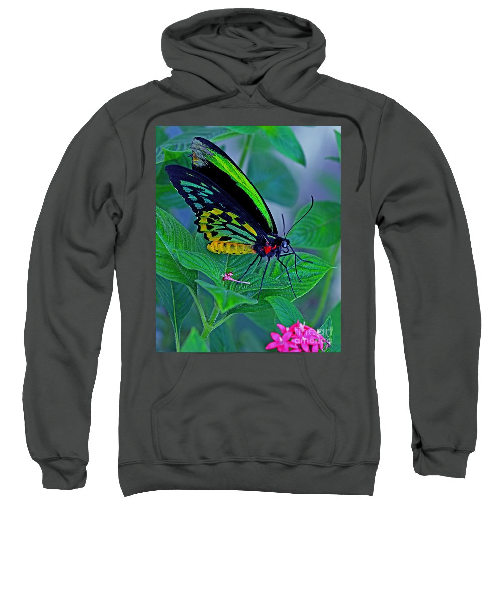 Butterfly Sweatshirt featuring the photograph Rainbow Butterfly by Larry Nieland