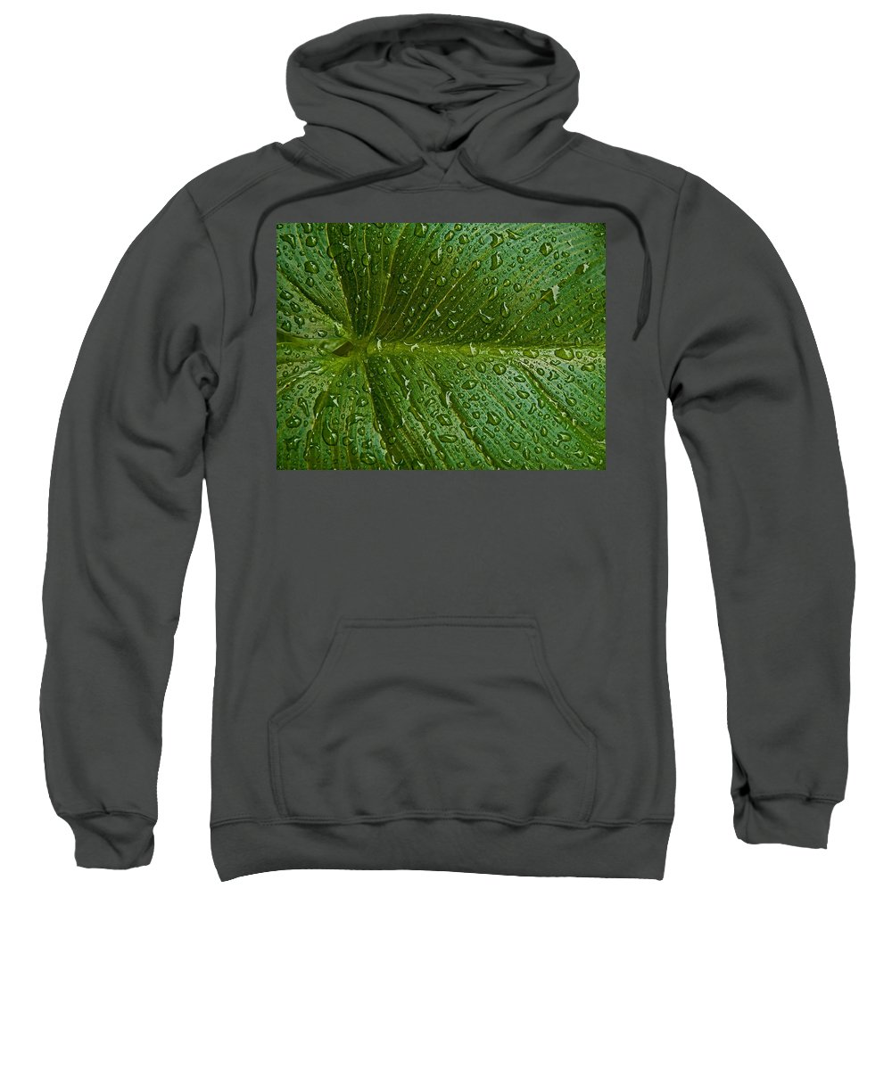 Large Leaves Sweatshirt featuring the photograph Raindrops by Guillermo Rodriguez