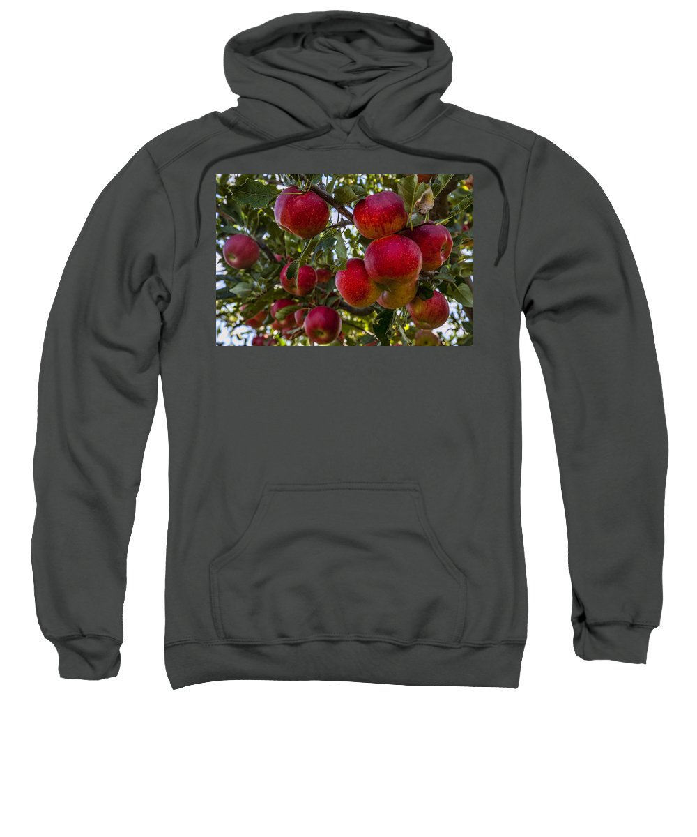 Apples Sweatshirt featuring the photograph Ready For Picking by Diana Powell
