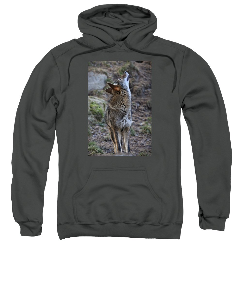 Wolves Sweatshirt featuring the photograph Ready To Howl by Athena Mckinzie