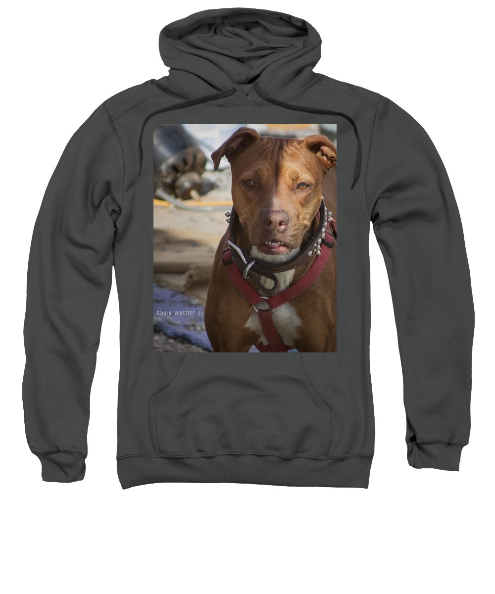 American Pit Bull Terrier Sweatshirt featuring the photograph Rebuild by David Wagner