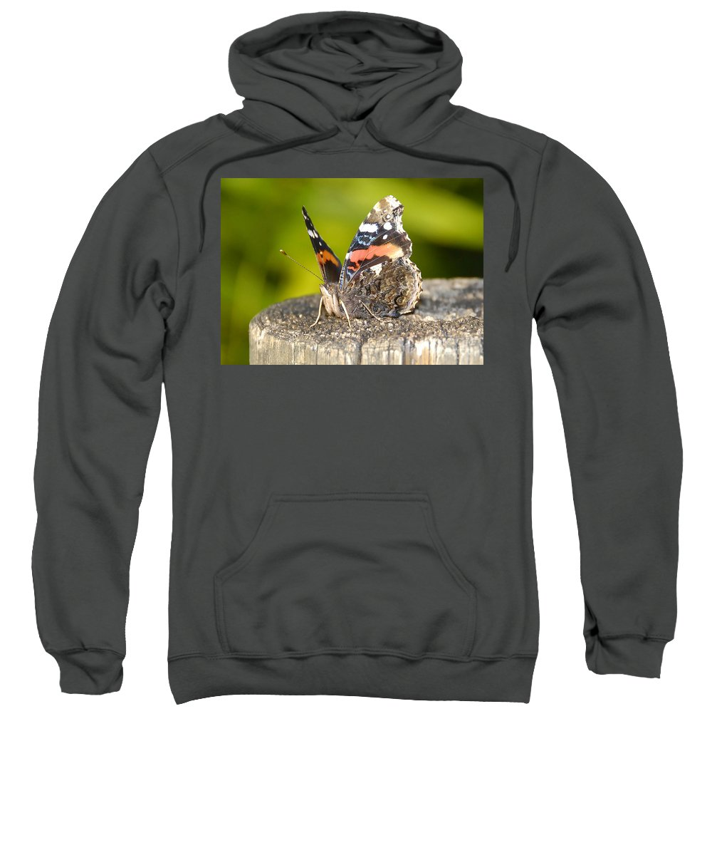 Red Admiral Butterfly Sweatshirt featuring the photograph Red Admiral Butterfly by David Lee Thompson