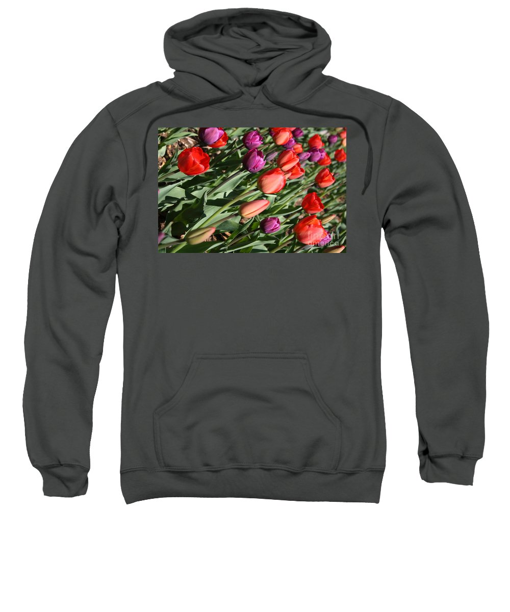 Tulips Sweatshirt featuring the photograph Red And Purple Tulips by Dora Sofia Caputo Photographic Design and Fine Art