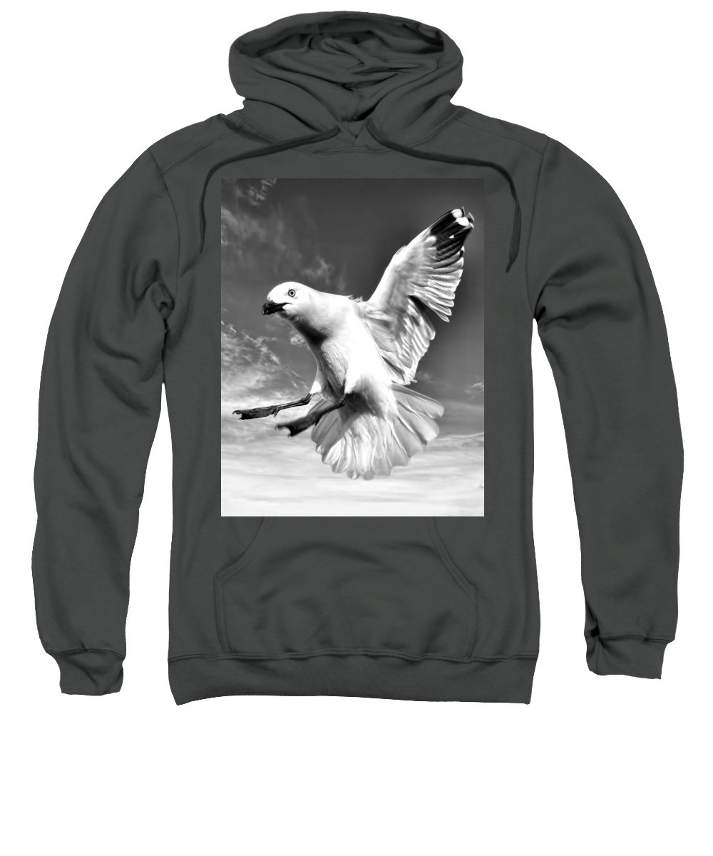 Amanda Stadther Sweatshirt featuring the photograph Red Billed Seagull In Black And White by Amanda Stadther