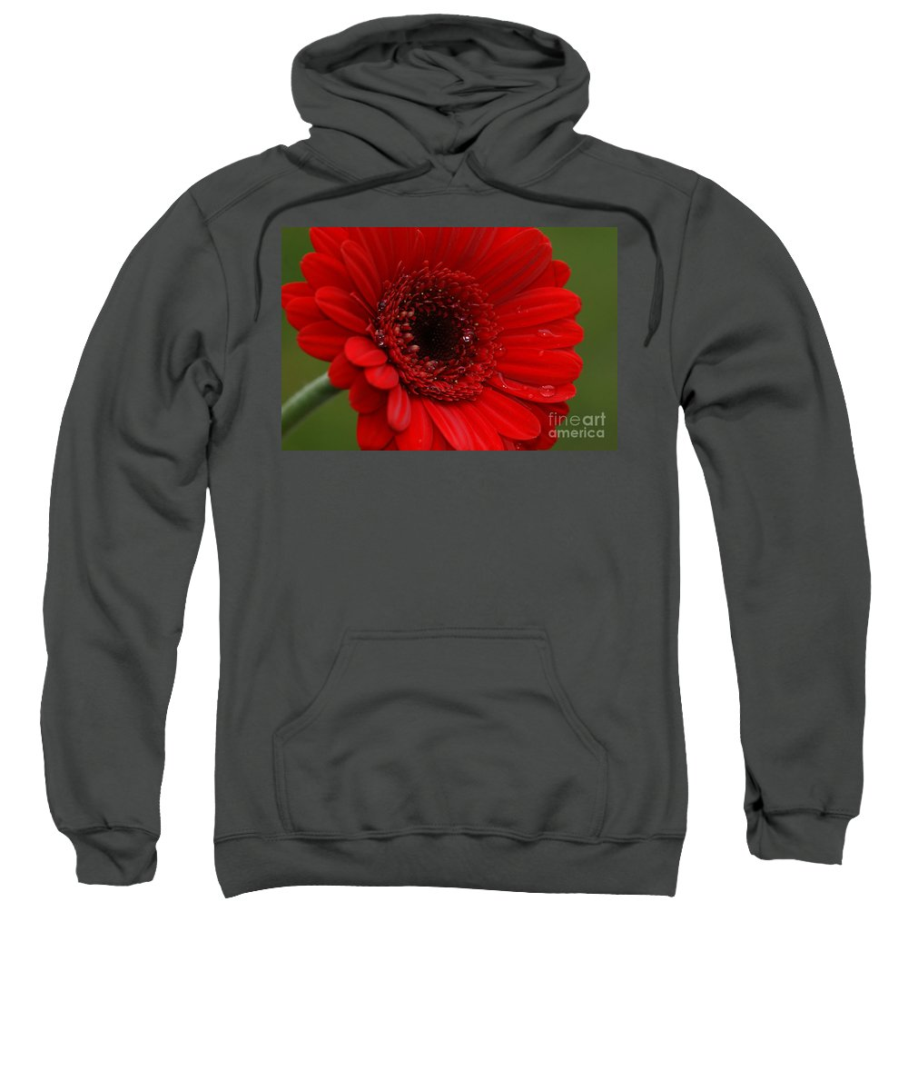 Red Sweatshirt featuring the photograph Red Daisy by Carol Lynch