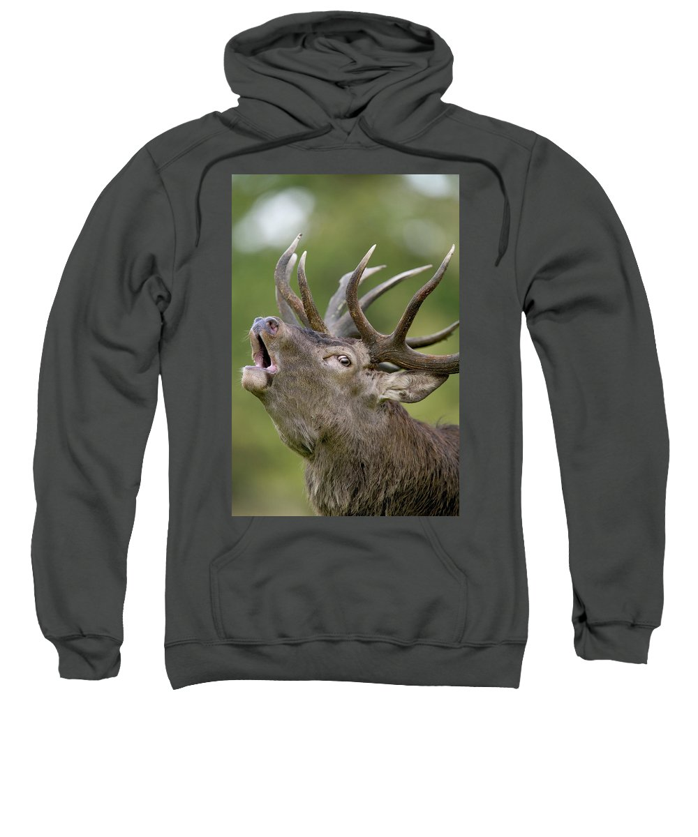 Jh Sweatshirt featuring the photograph Red Deer Cervus Elaphus Stag Bugling by Cyril Ruoso