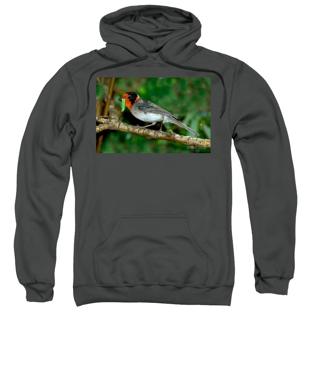 Animal Sweatshirt featuring the photograph Red-faced Warbler With Caterpillar by Anthony Mercieca