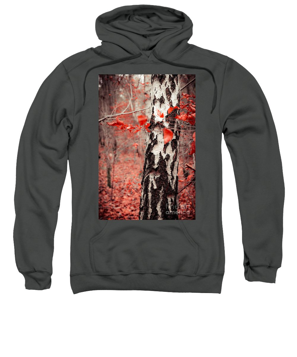 Autumn Sweatshirt featuring the photograph Red Forest by Hannes Cmarits