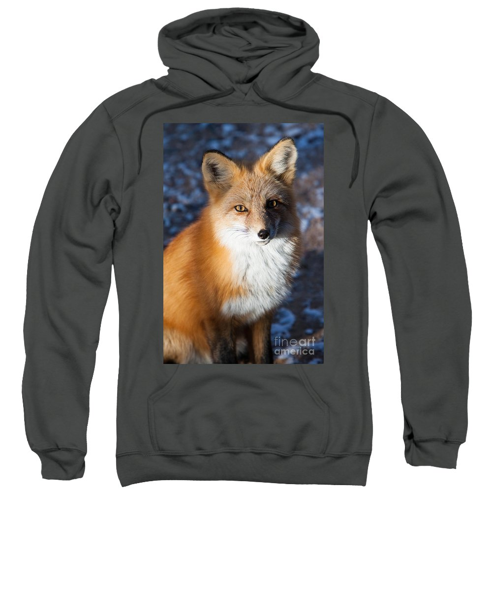 Animal Sweatshirt featuring the photograph Red Fox Standing by John Wadleigh