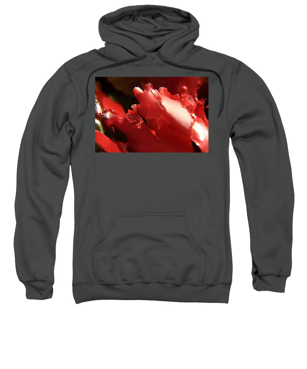 Kelp Sweatshirt featuring the photograph Red Kelp by Aidan Moran