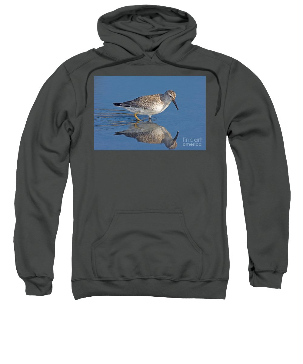 Fauna Sweatshirt featuring the photograph Red Knot Calidris Canutus by Anthony Mercieca