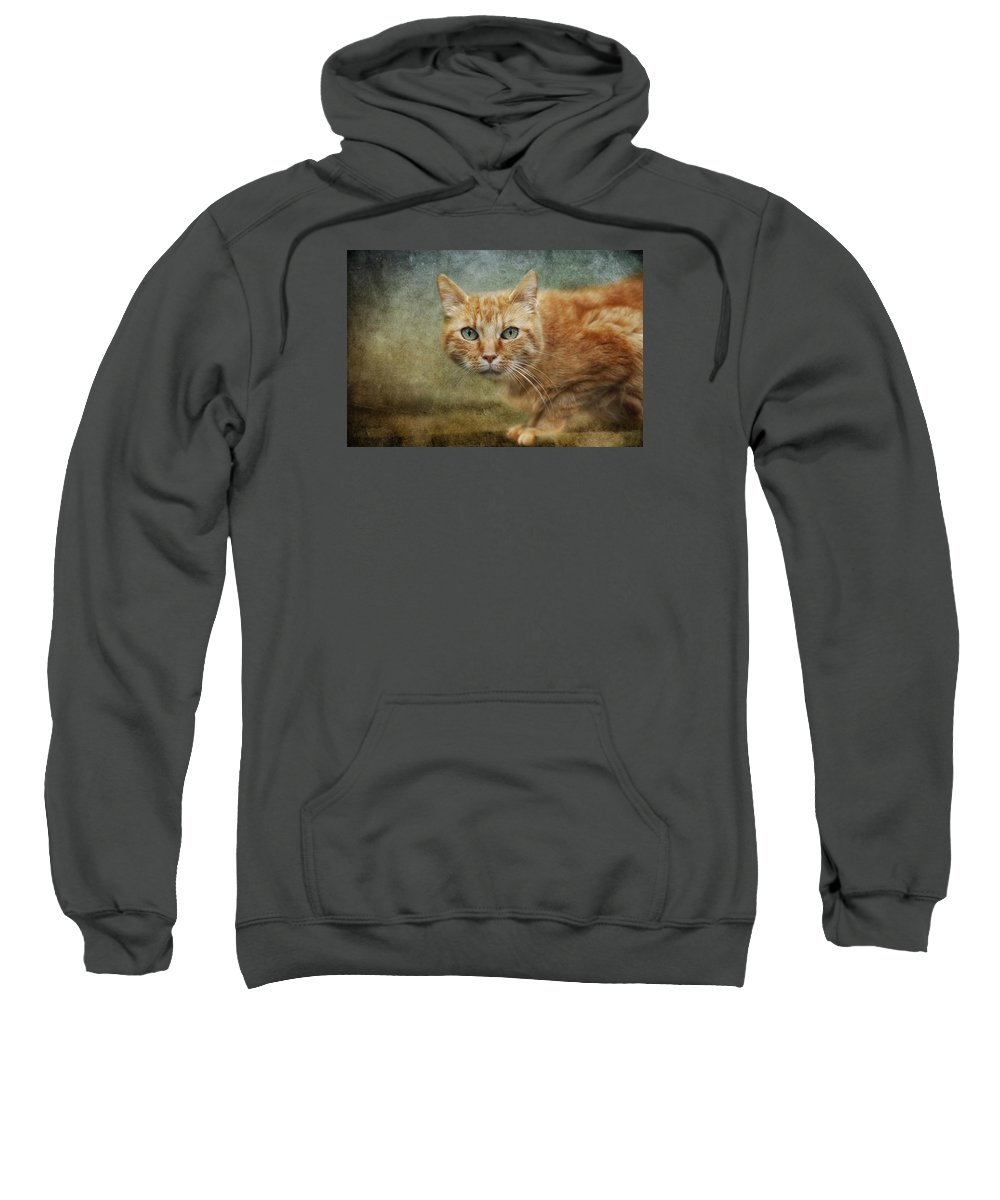 Cat Sweatshirt featuring the photograph Red Lady by Claudia Moeckel