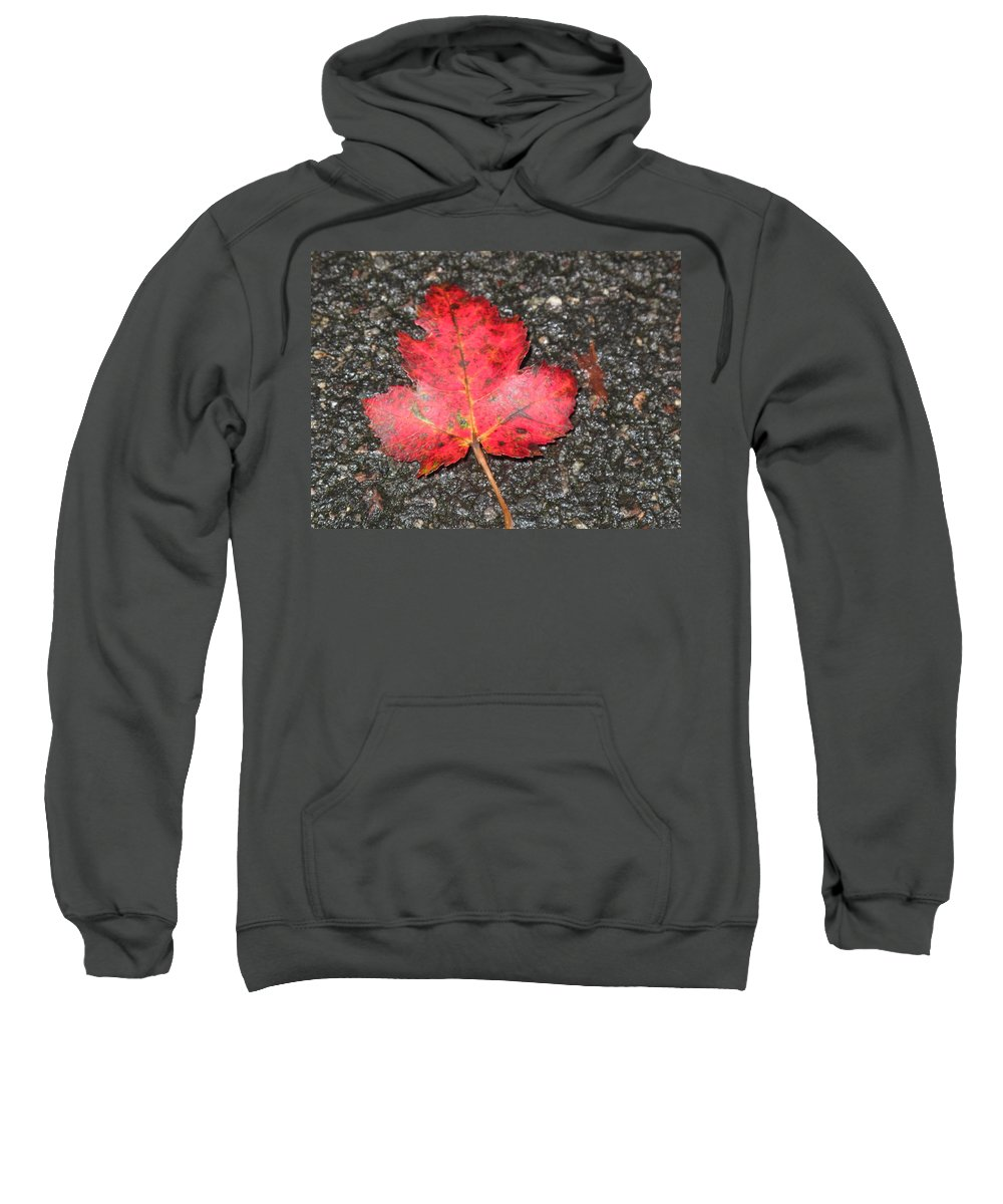 Leaves Sweatshirt featuring the photograph Red Leaf On Pavement by Barbara McDevitt