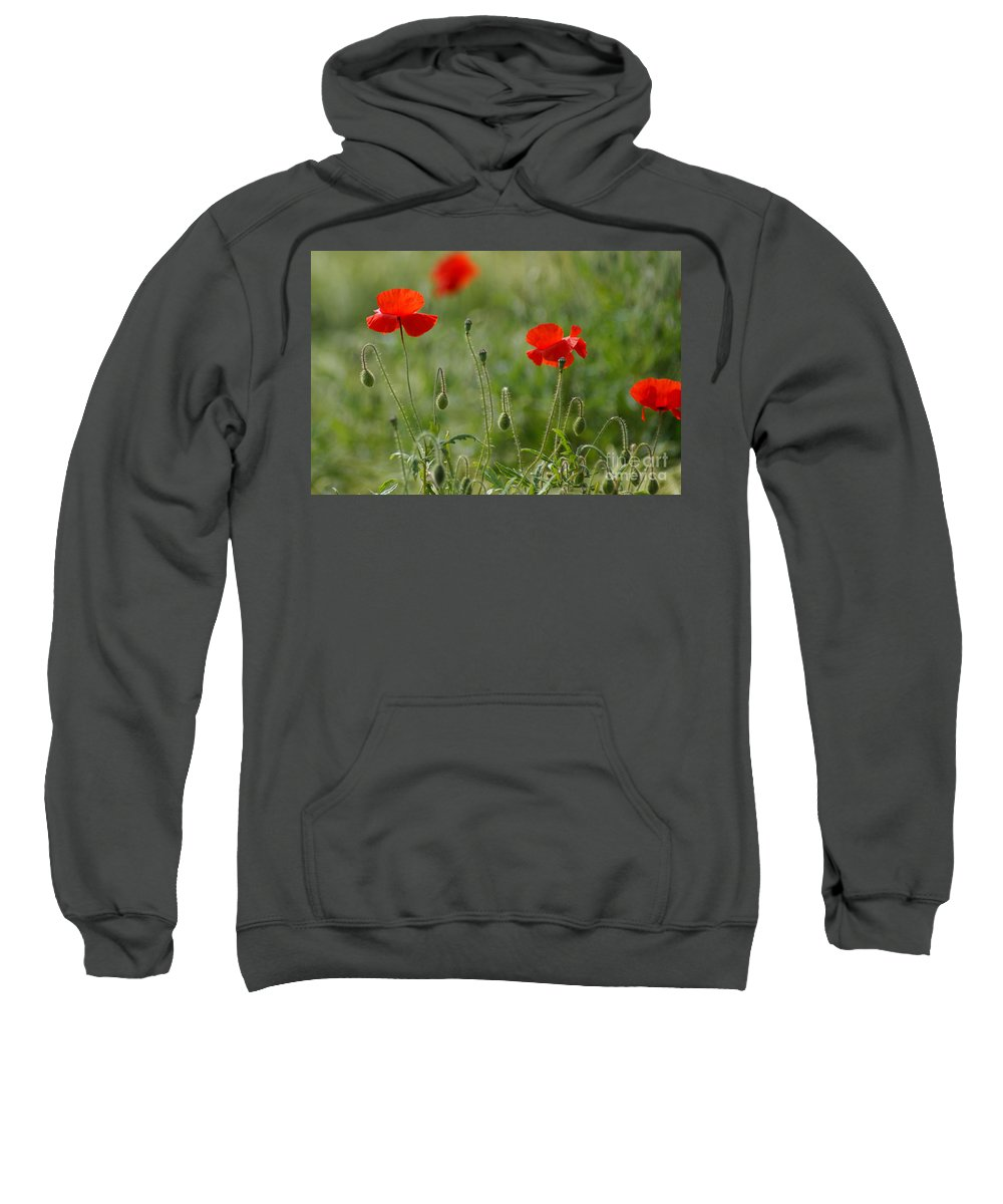 Poppies Sweatshirt featuring the photograph Red Poppies 2 by Carol Lynch