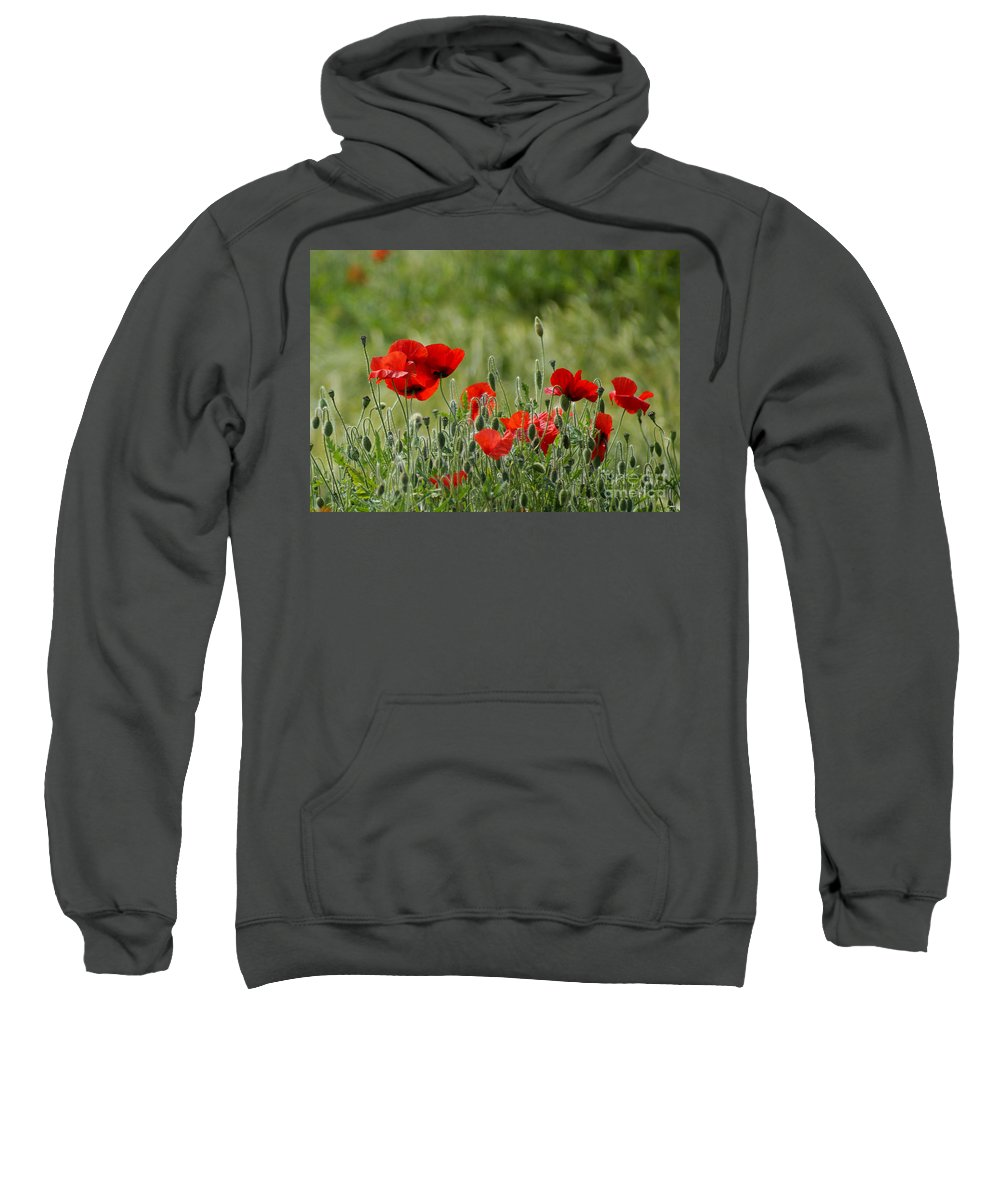 Poppies Sweatshirt featuring the photograph Red Poppies 3 by Carol Lynch