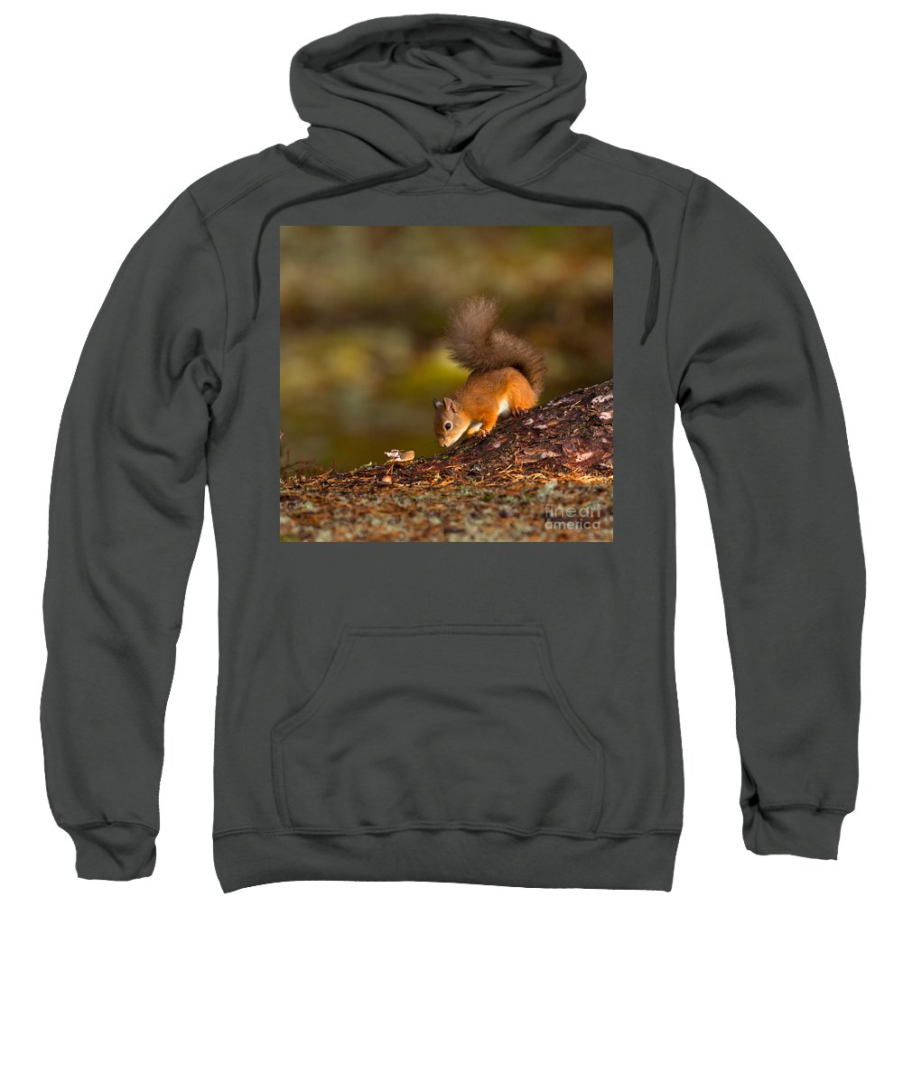Eurasian Sweatshirt featuring the photograph Red Squirrel In Autumn by Louise Heusinkveld