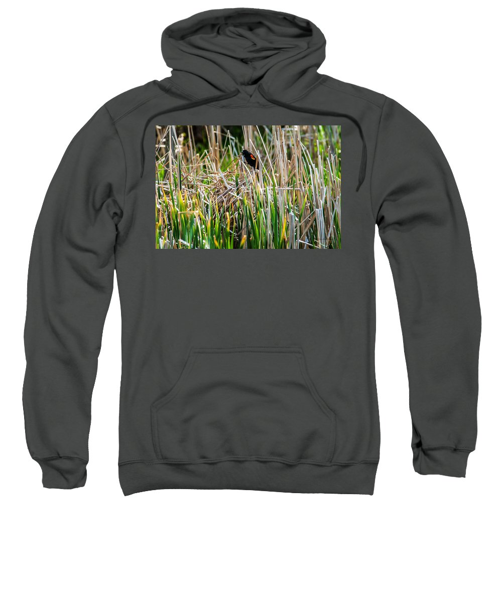 Heronheaven Sweatshirt featuring the photograph Red-winged Black Bird In The Cattails by Edward Peterson