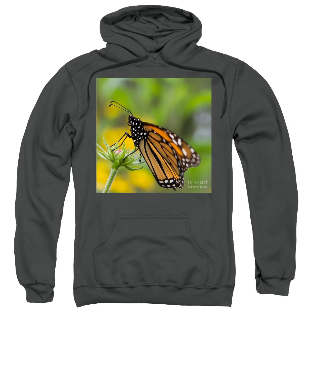 Monarch Sweatshirt featuring the photograph Resting Monarch Butterfly by Nikki Vig