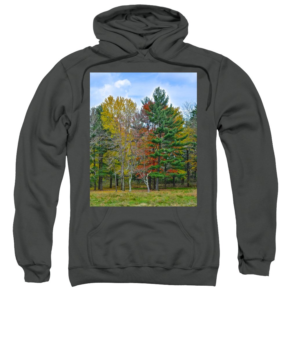 Pine Sweatshirt featuring the photograph Retreating Pines by Frozen in Time Fine Art Photography