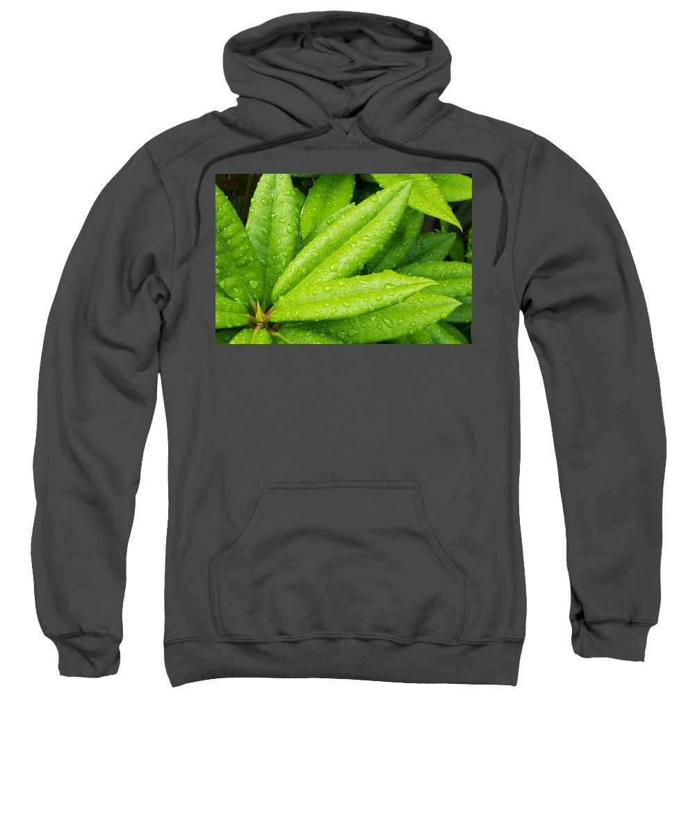 Agriculture Sweatshirt featuring the photograph Rhododendron Leaves by John Trax