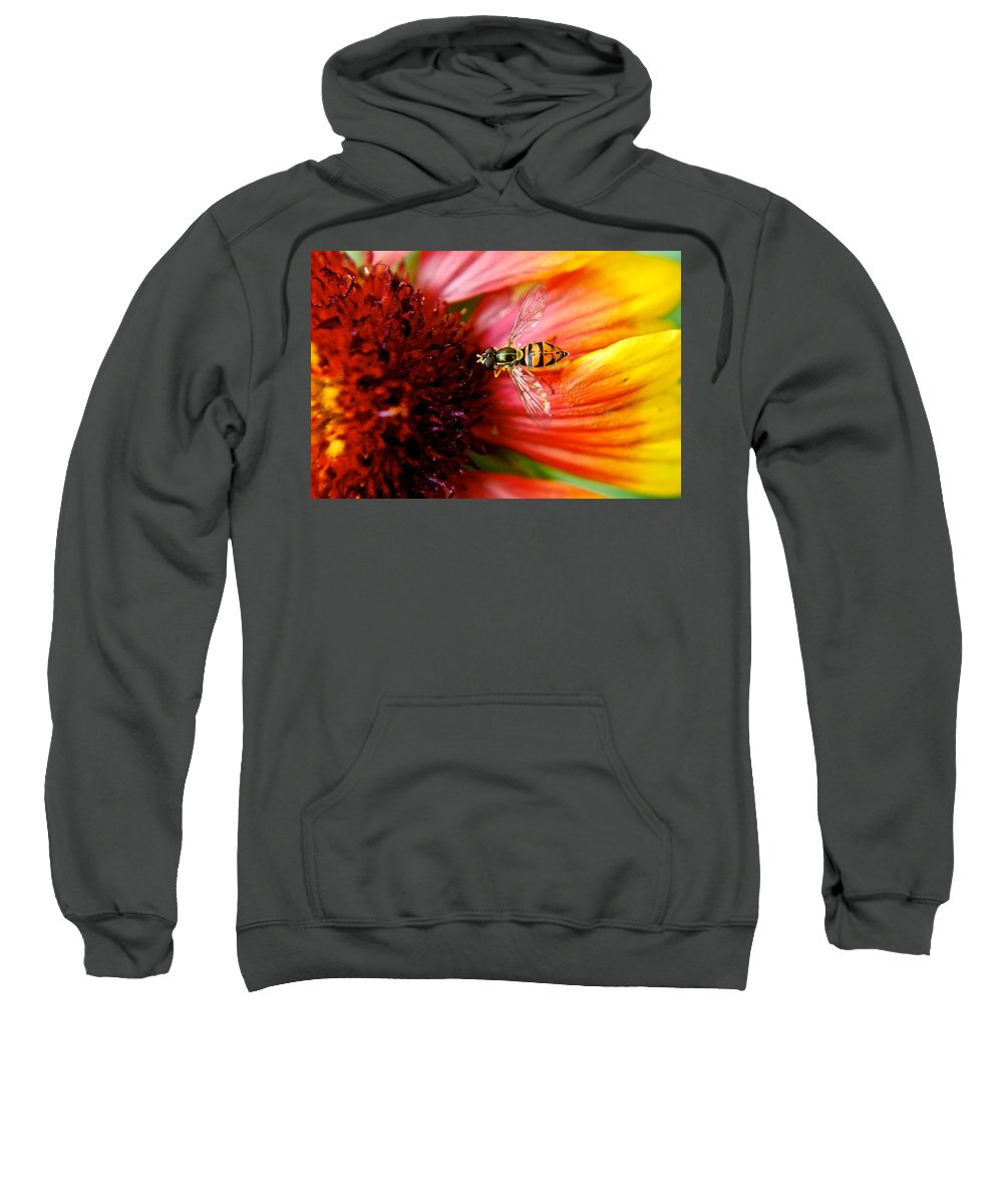 Bee Sweatshirt featuring the photograph Rich Reward by Frozen in Time Fine Art Photography