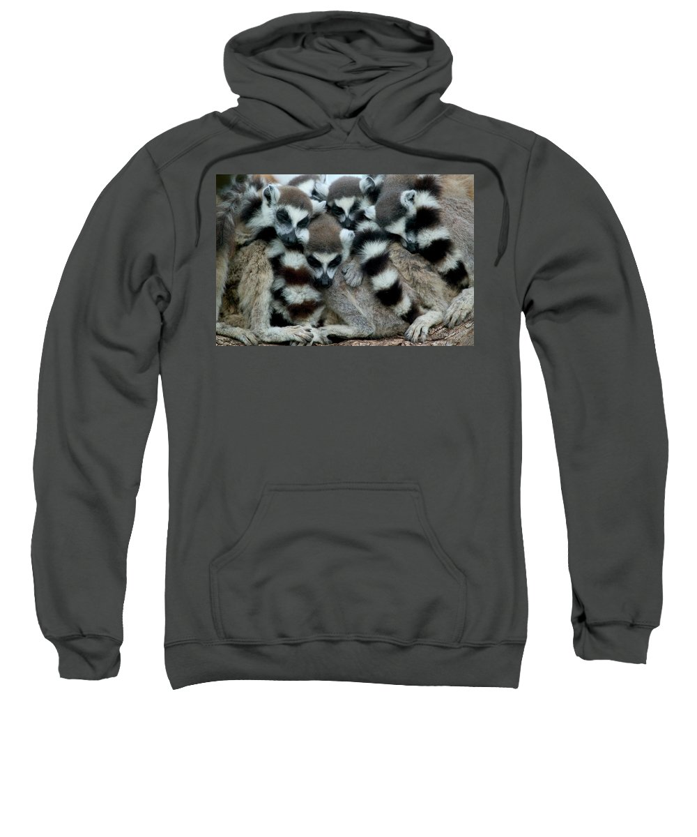 Jh Sweatshirt featuring the photograph Ring-tailed Lemur Lemur Catta Group by Cyril Ruoso