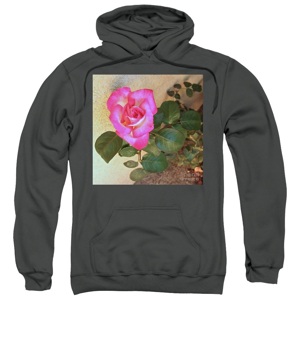 Pink Roses Sweatshirt featuring the photograph Rise And Shine by Suzanne Oesterling