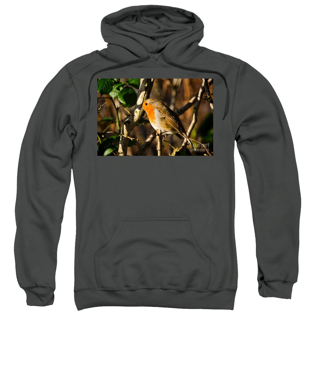 Robin Sweatshirt featuring the photograph Robin In The Hedgerow by Susie Peek