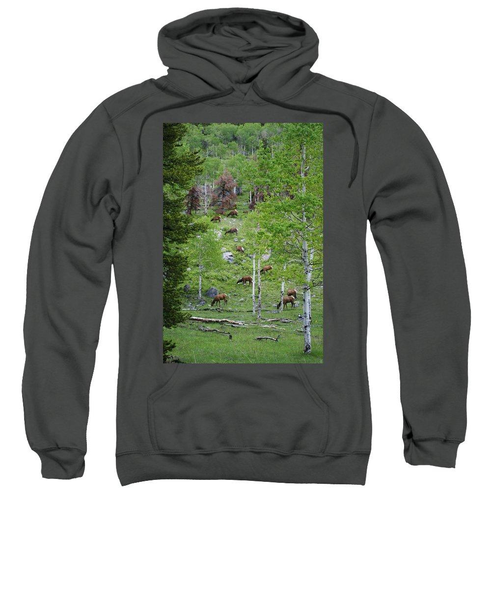 Elk Sweatshirt featuring the photograph Rocky Mountain Elk Herd by Alan Hutchins
