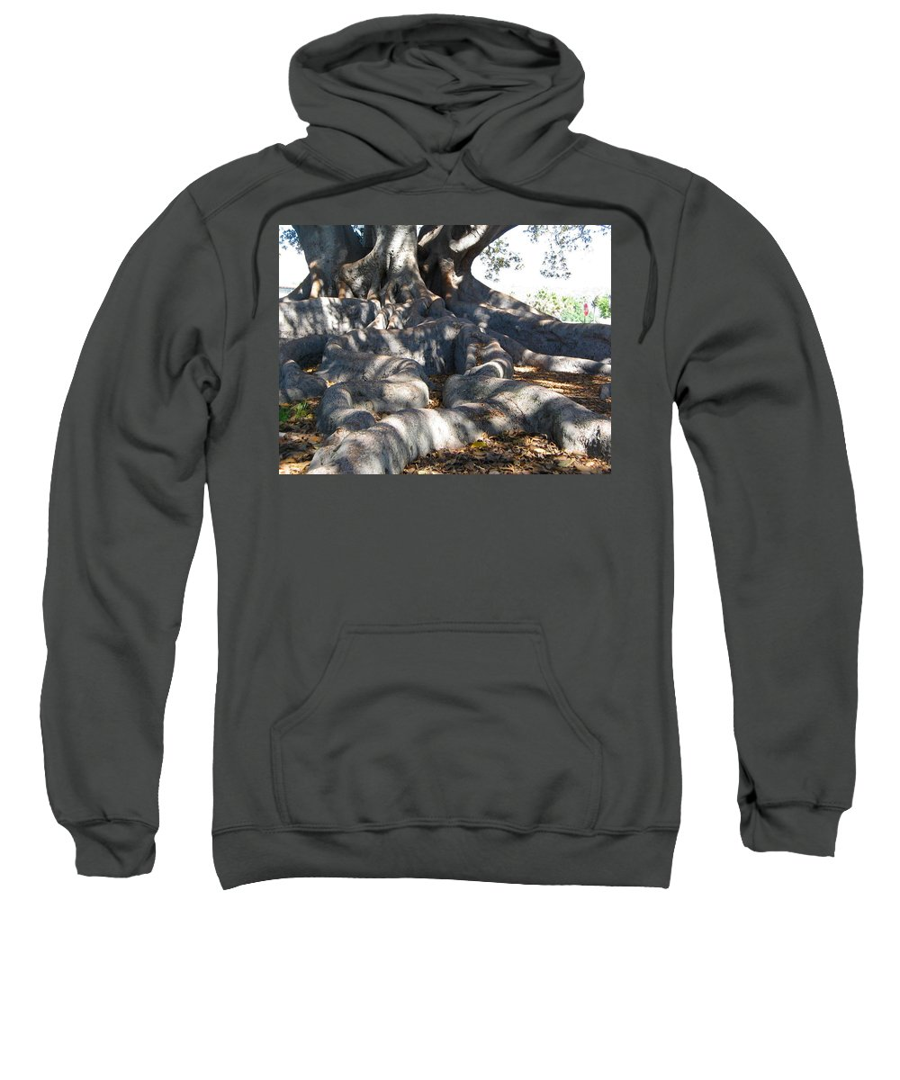 Moreton Fig Tree Sweatshirt featuring the photograph Roots Of Large Fig Tree by Denise Mazzocco