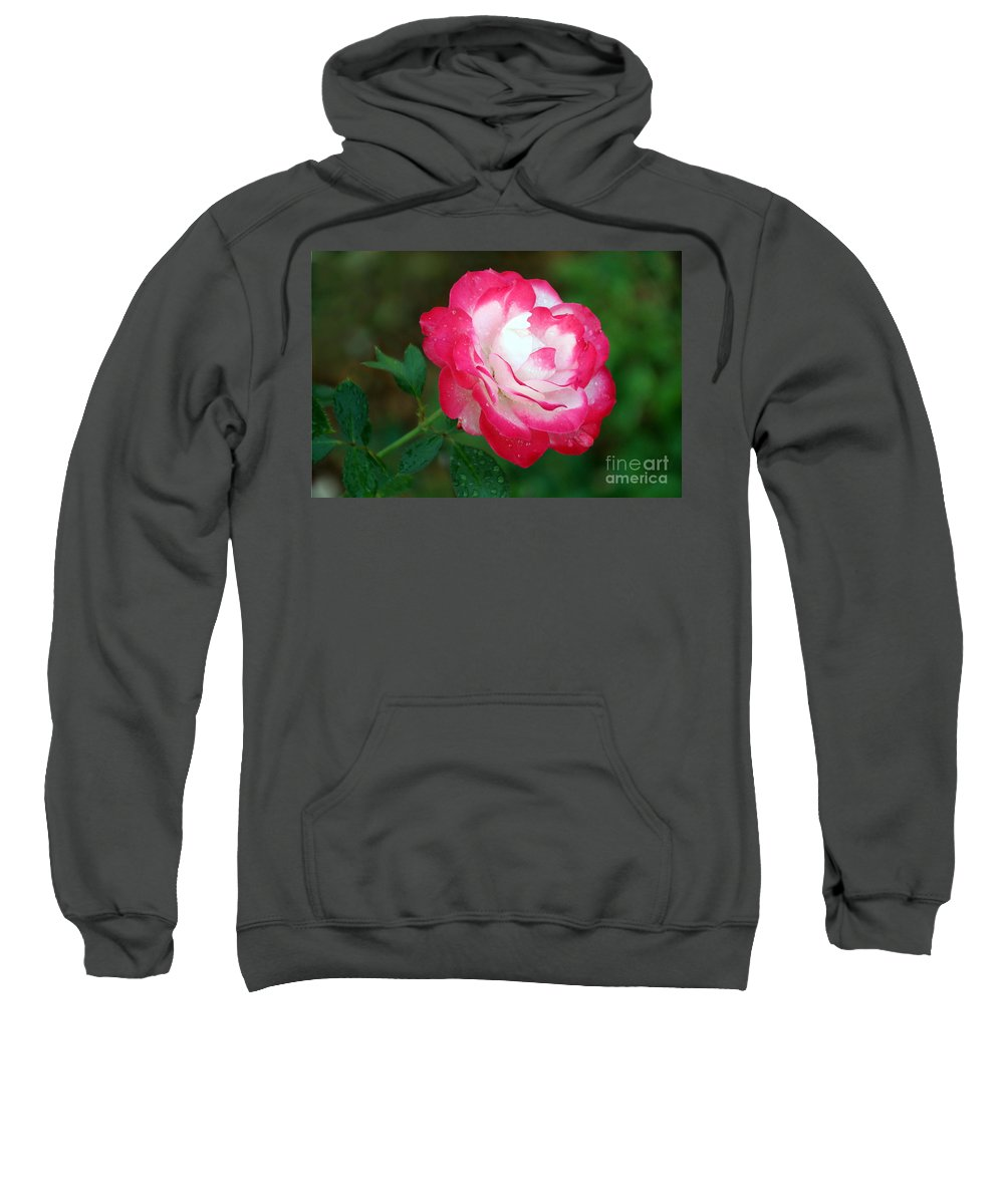 Rose Sweatshirt featuring the photograph Rosy Reds And Whites by Elizabeth Winter