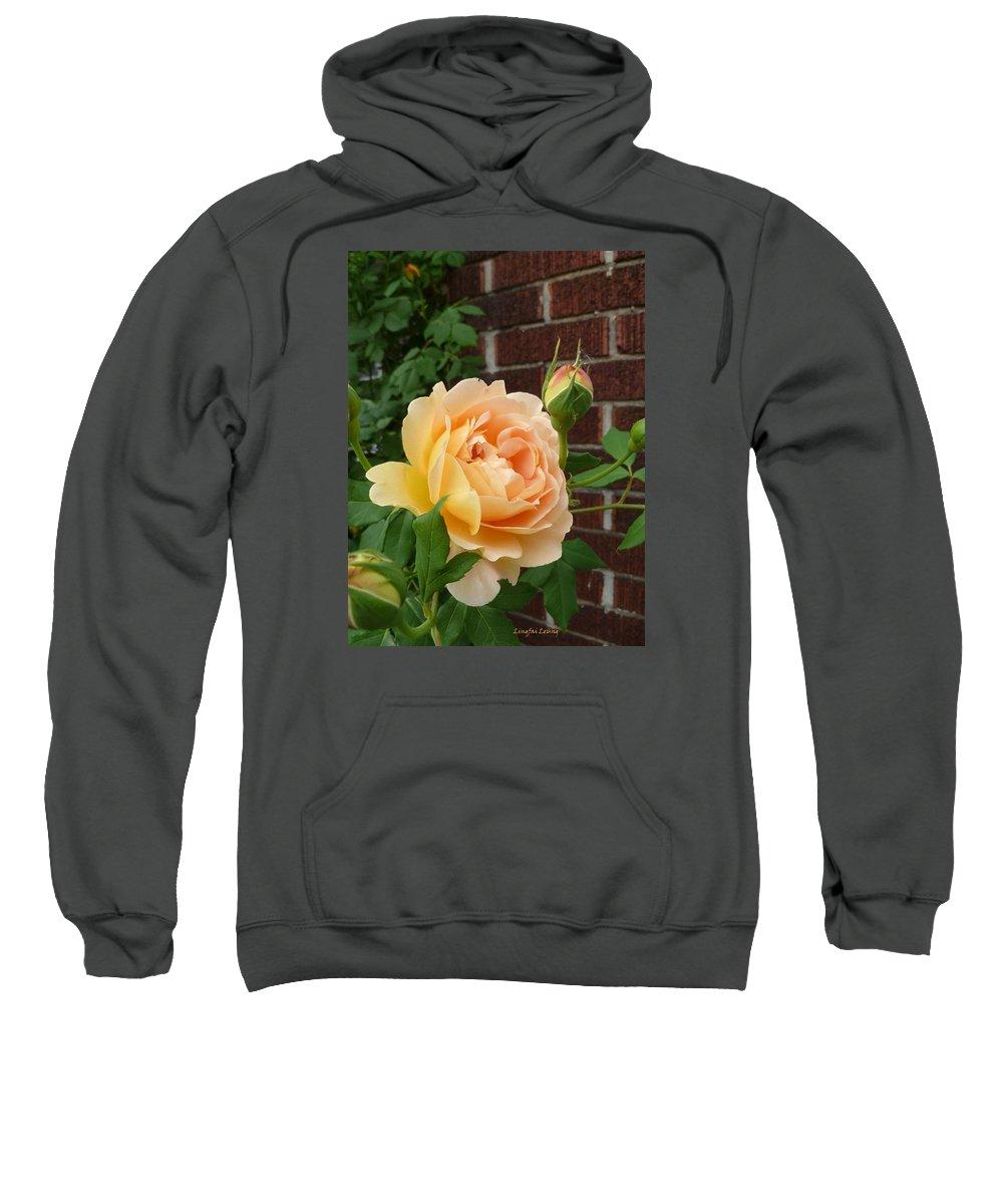 Flower Macro Sweatshirt featuring the photograph Rosy Sunshine by Lingfai Leung