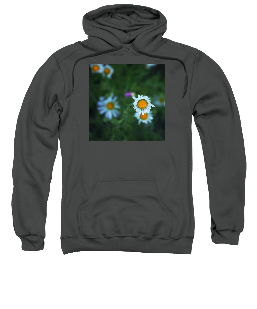 Blackfoot Daisies Sweatshirt featuring the photograph Roxy by Trish Mistric