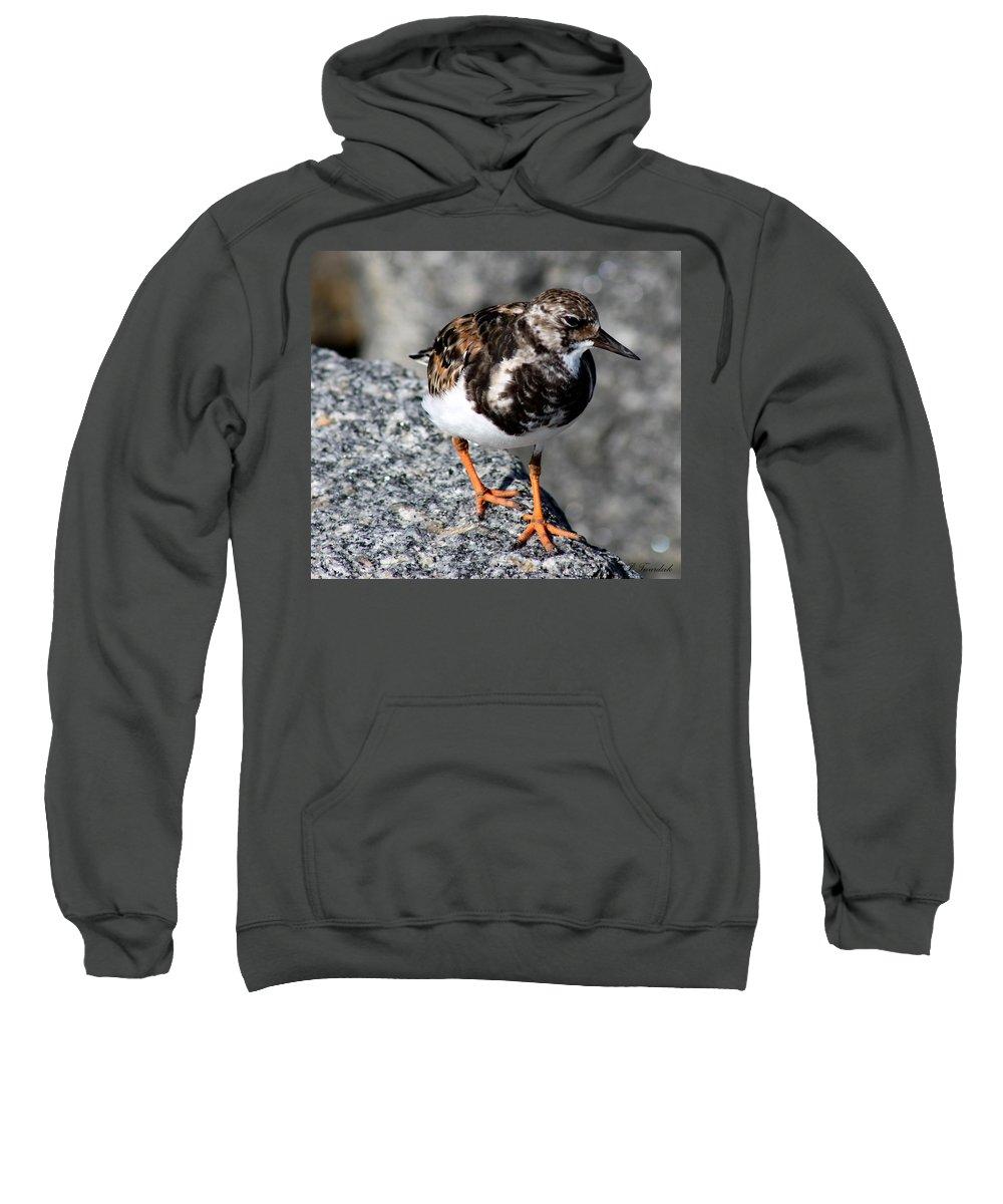 Bird Sweatshirt featuring the photograph Ruddy Makes For The Rocks by Patricia Twardzik