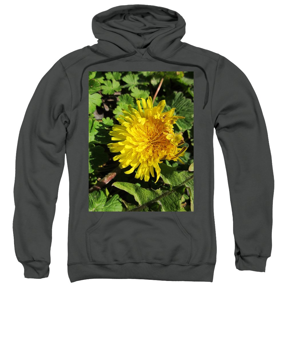 Dandelion Sweatshirt featuring the photograph Ruffled Dandelion by Rosita Larsson
