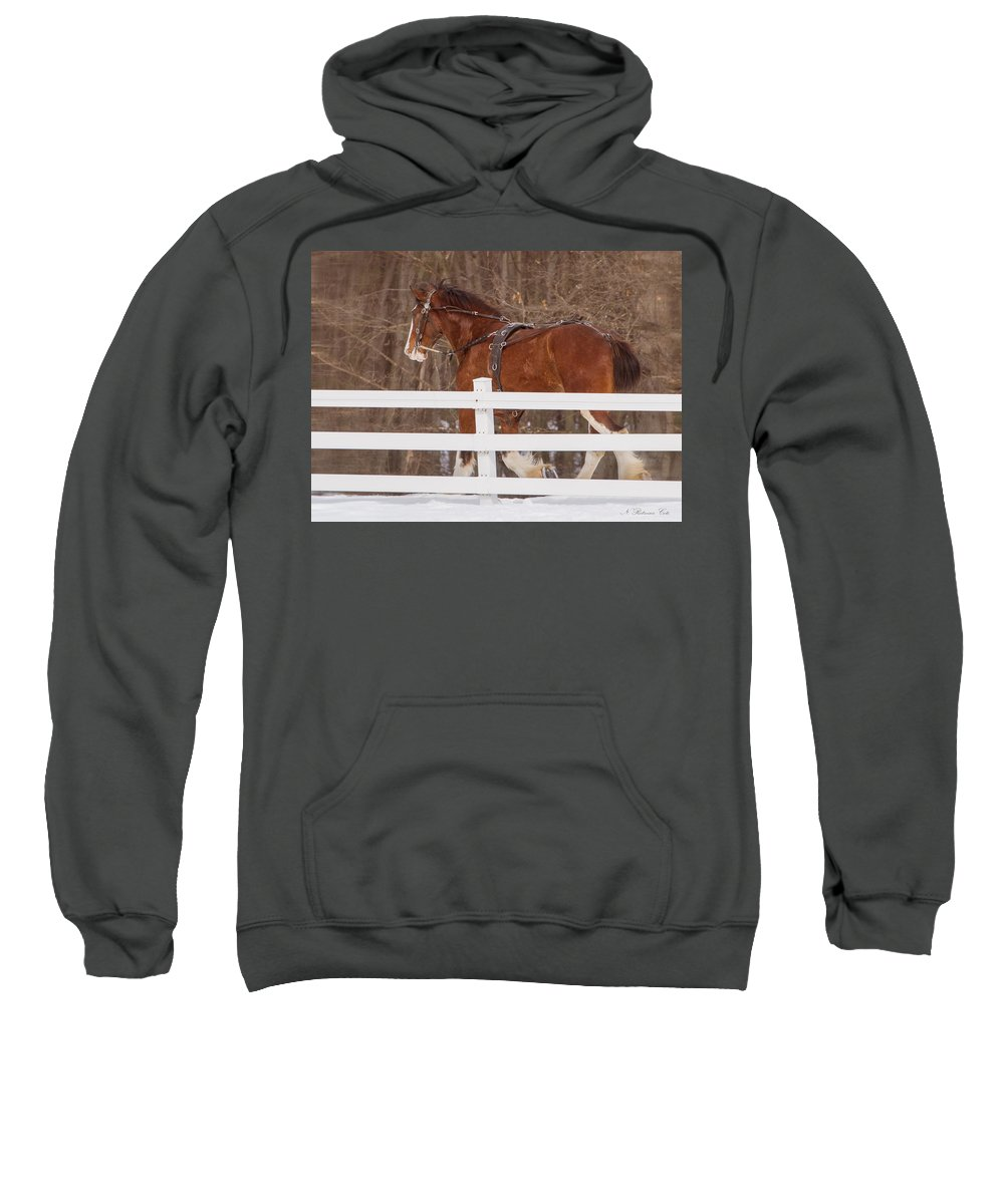 Horse Sweatshirt featuring the photograph Running Clydesdale by Natalie Rotman Cote