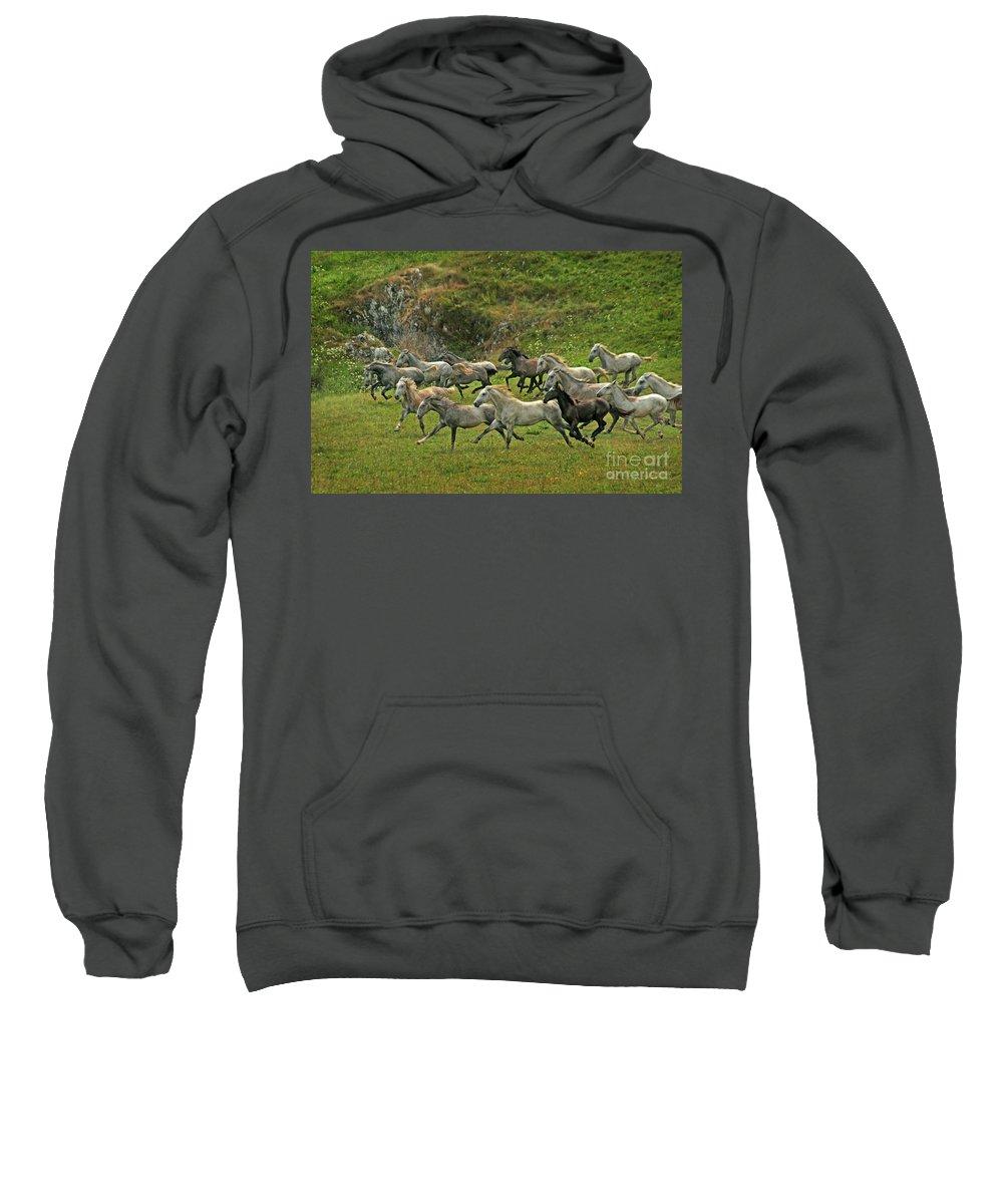 Horse Sweatshirt featuring the photograph Running Free by Angel Ciesniarska