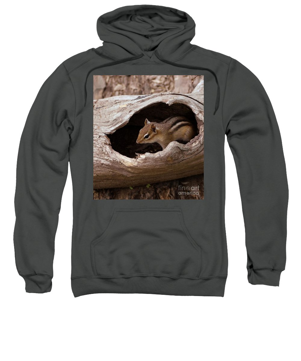 Chipmunk Sweatshirt featuring the photograph Safe Place by Kathleen Struckle