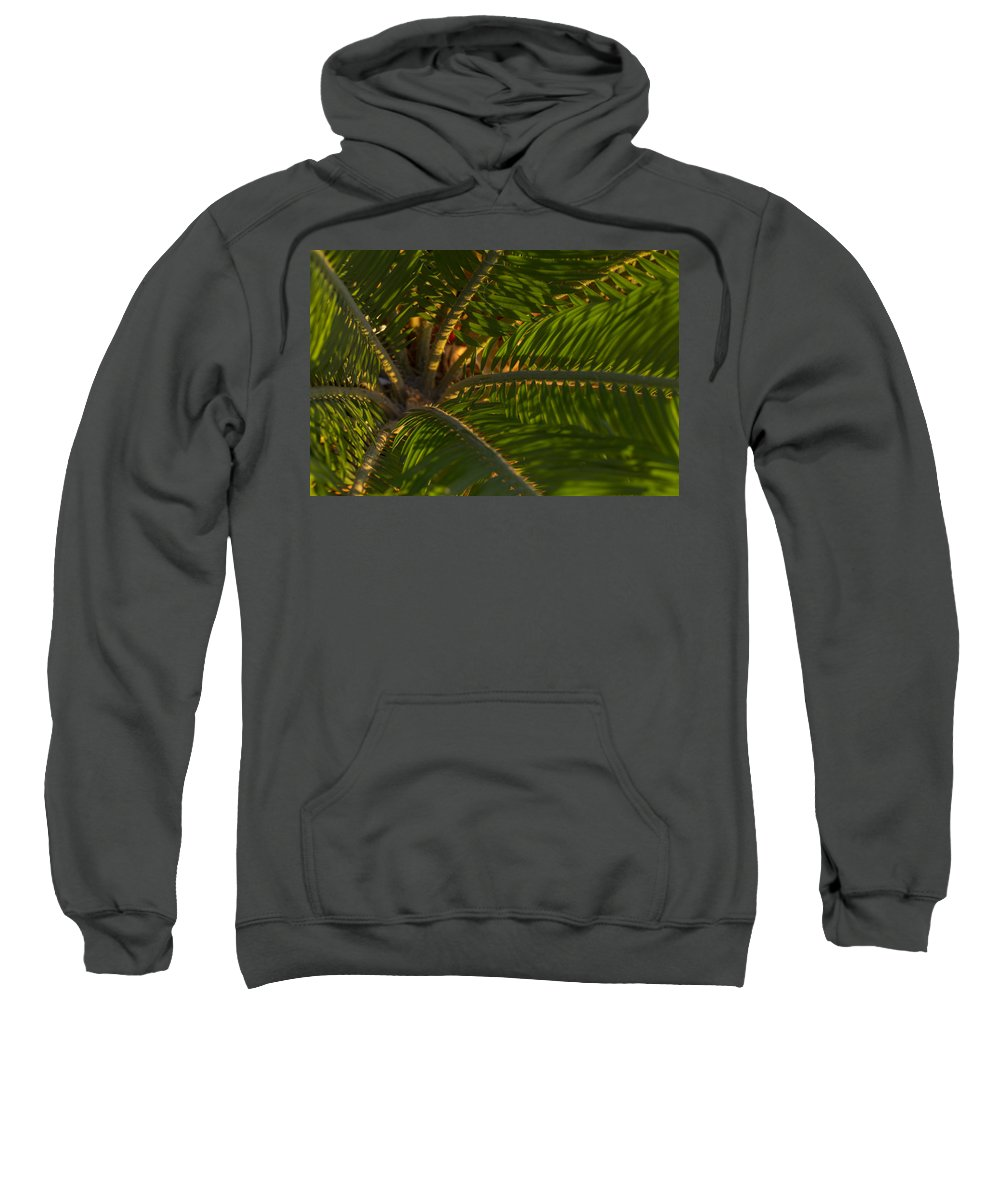Palm Sweatshirt featuring the photograph Sago Symmetry 1 by Scott Campbell