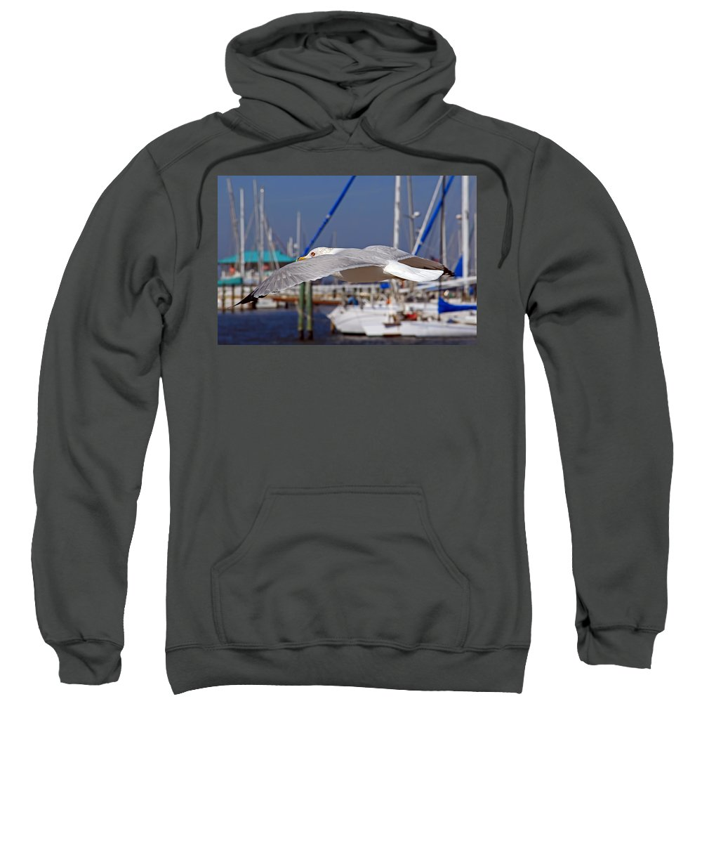 Seagull Sweatshirt featuring the photograph Sailing by HH Photography of Florida