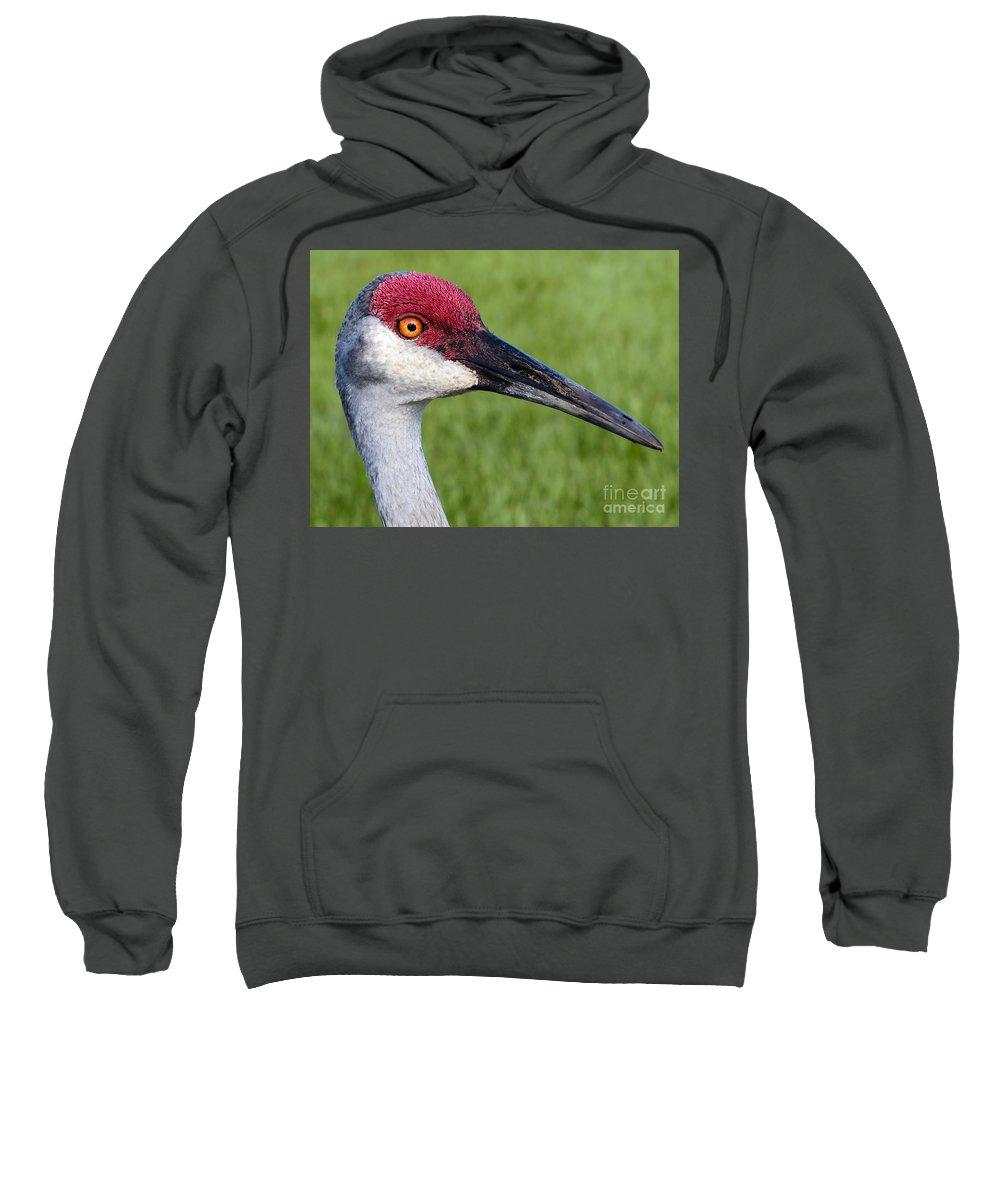 Bird Sweatshirt featuring the photograph Sandhill Crane Portrait by Zina Stromberg
