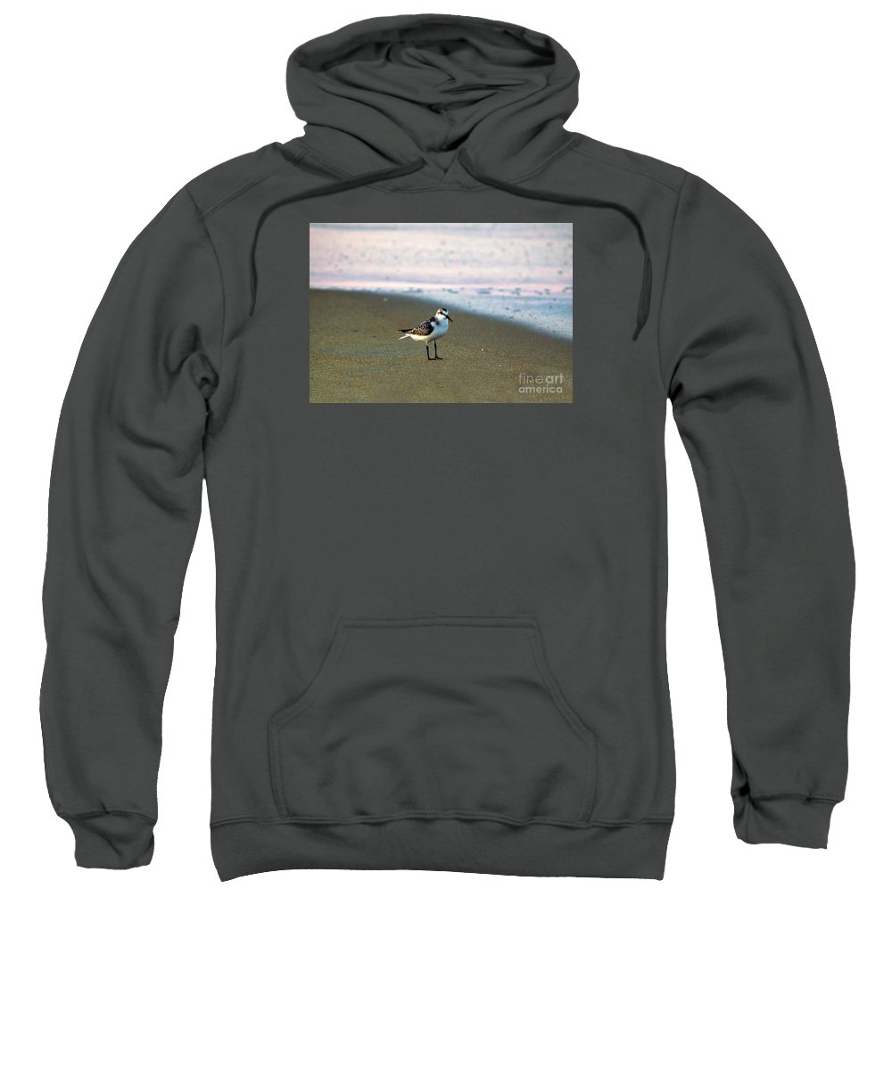 Bird Photography Sweatshirt featuring the photograph Sandpiper by Patricia Griffin Brett