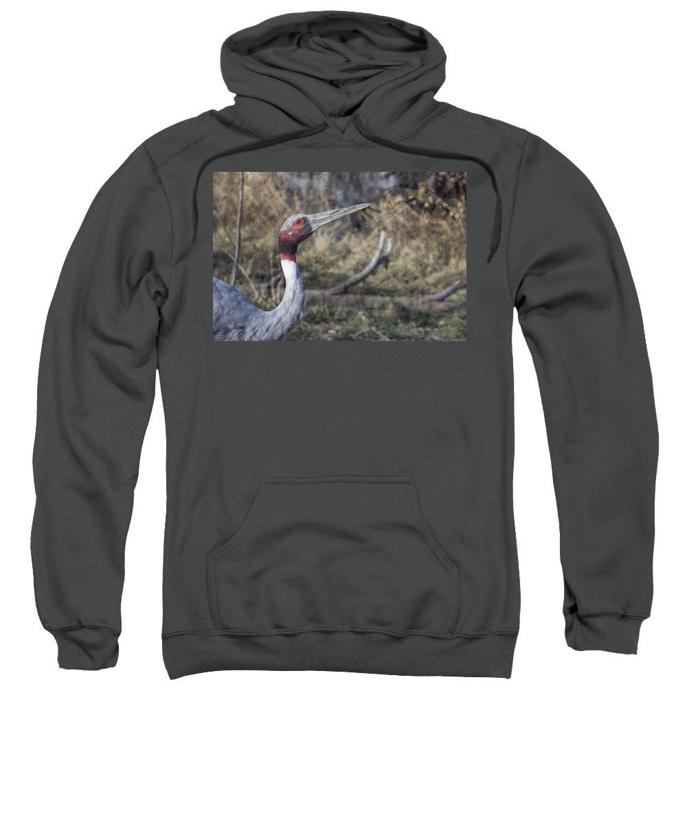 Sarus Crane Sweatshirt featuring the photograph Sarus Crane by Becca Buecher