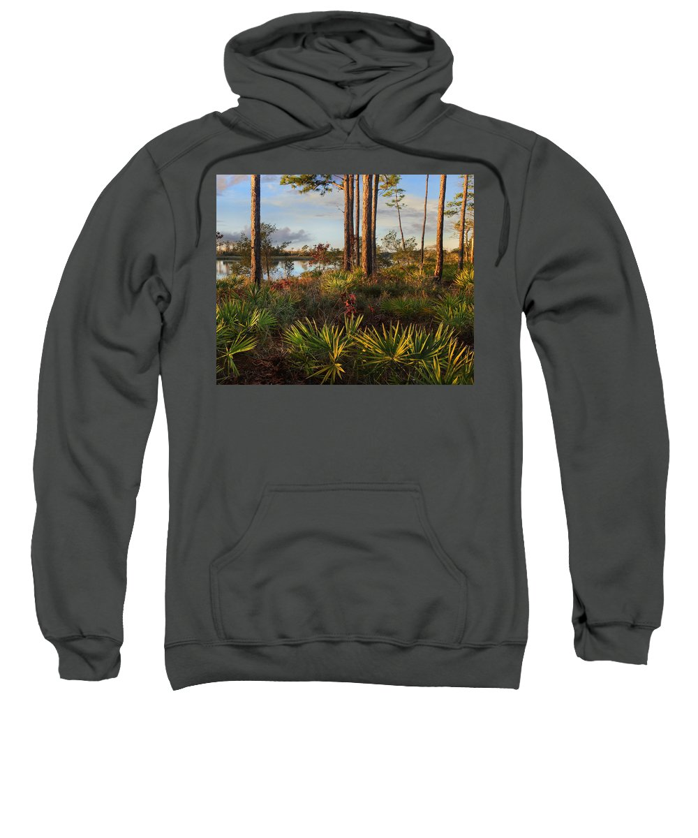 Tim Fitzharris Sweatshirt featuring the photograph Saw Palmetto And Longleaf Pine by Tim Fitzharris