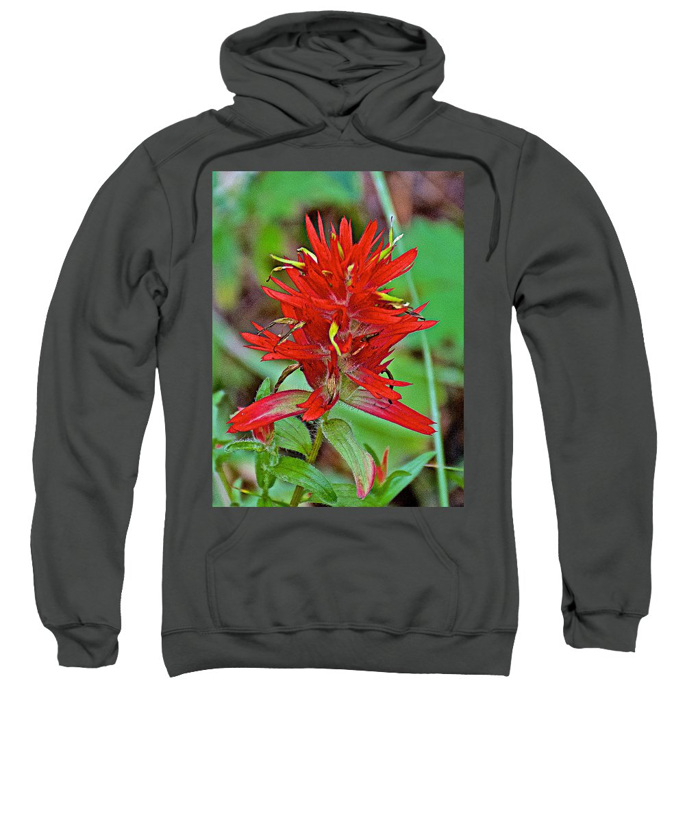 Scarlet Paintbrush On Trail To Swan Lake In Grand Teton National Park Sweatshirt featuring the photograph Scarlet Paintbrush On Trail To Swan Lake In Grand Teton National Park-wyoming- by Ruth Hager